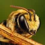 Бджола. (Історії життя)