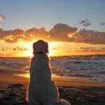 Вірний пес Дунчо. (Історії життя)