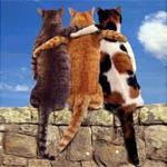Дружба (Урок)